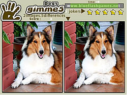 Gimme 5 Dogs