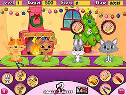Pets Daycare