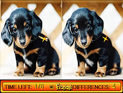Differences in Puppy Land